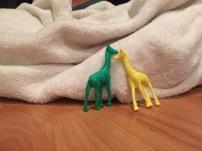 giraffe's on the reserve